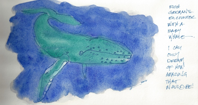W16 3 9 BABY WHALE