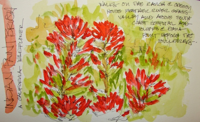 W16 7 14 PENTALIC INDIAN PAINTBRUSH 01
