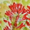 W16 7 14 PENTALIC INDIAN PAINTBRUSH 03 SQ