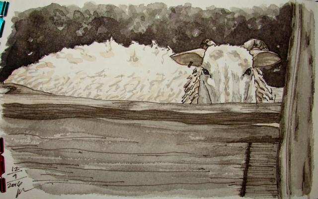 w16-12-11-pentalic-dans-sheep-04