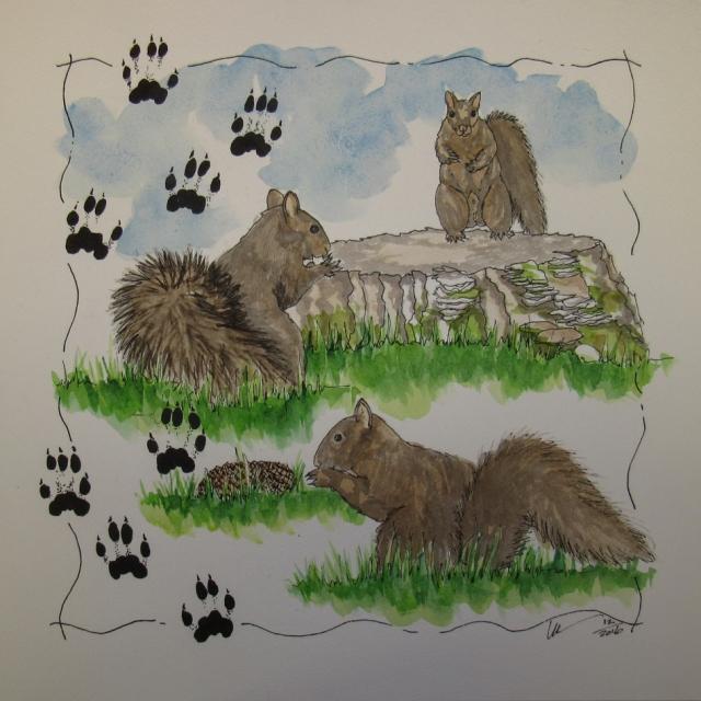 17-2-dan-black-squirrel-0415