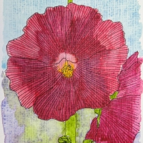 W17 6 4 HPC CC HOLLYHOCKS-SQ
