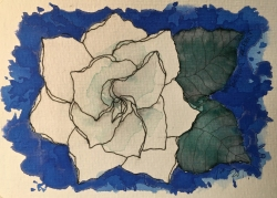 W17 7 11 Boyd's Gardenia-2248