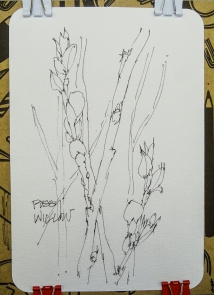 W17 7 22 PUSSYWILLOW-01150