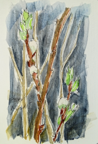 W17 7 22 PUSSYWILLOW-01182