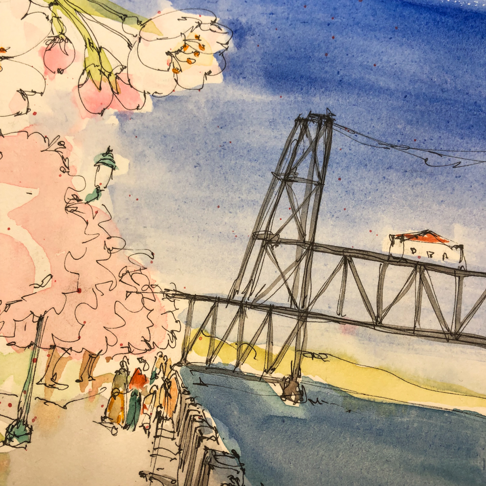 USk: Cherry Blossoms in Tom McCall Park
