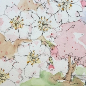 W19 4 1 HA4 USK CHERRY BLOSSOMS-9