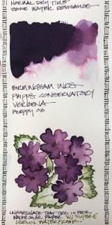 W19 INK BIRMINGHAM VERBENA-4442
