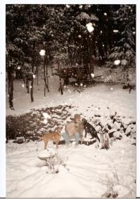 dogs at timberlake