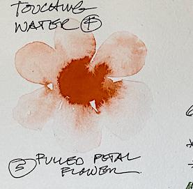 w21-8-12-ha4-wildflower-sketchbook1-4